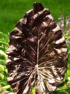 4759OR-on-a-concrete-leaf-yard-art